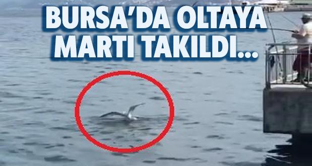 Bursada Oltaya Balık Yerine Martı Takıldı